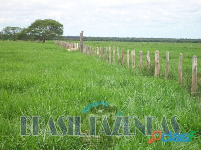Fazenda na Bahia Oeste 21 mil hectares 2