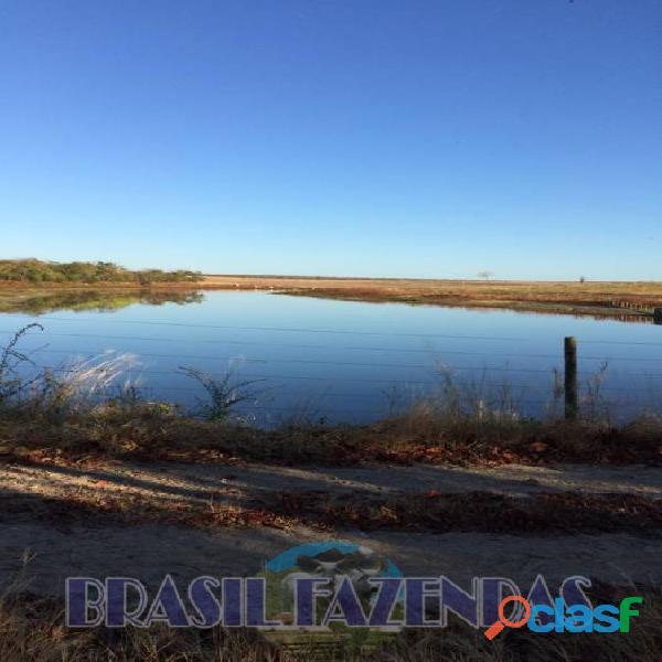 Fazenda na Bahia Oeste 21 mil hectares 4