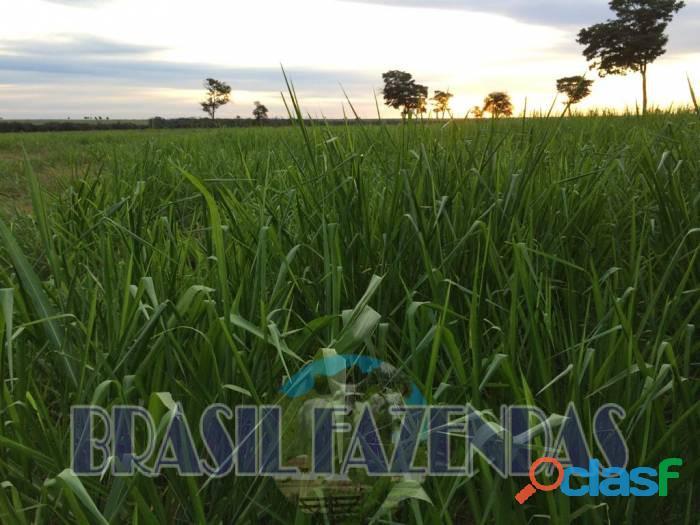 Fazenda na Bahia Oeste 21 mil hectares 7