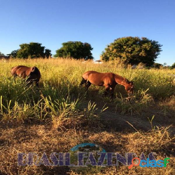 Fazenda na Bahia Oeste 21 mil hectares 8