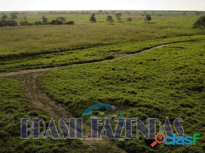 Fazenda na Bahia Oeste 21 mil hectares 9