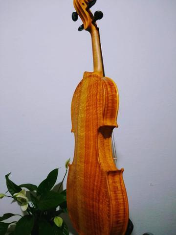 Violino roma rajado
