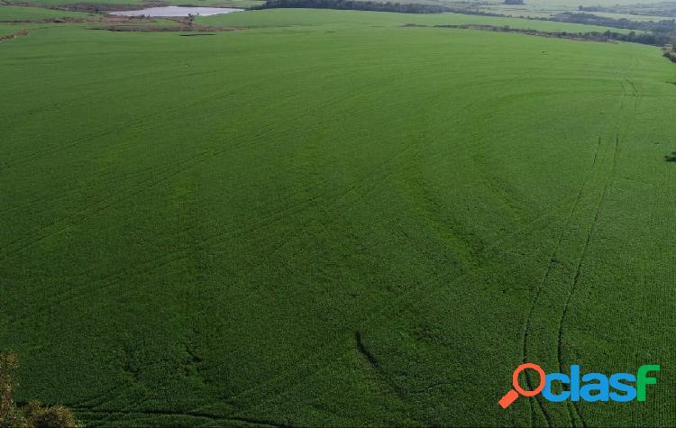 Área de 600 hectares em são luiz gonzaga (rs)