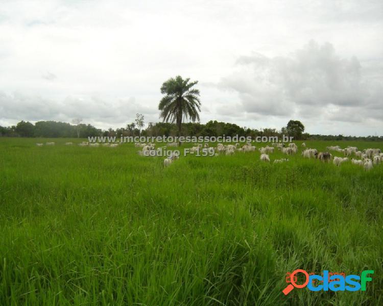 Fazenda - venda - belmonte - ba - centro