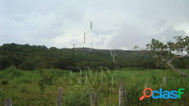 Fazenda 300 hectares dupla aptidão a venda em jaciara mato grosso