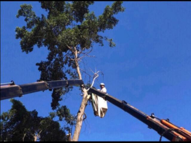 Cortes e podas de árvores em geral