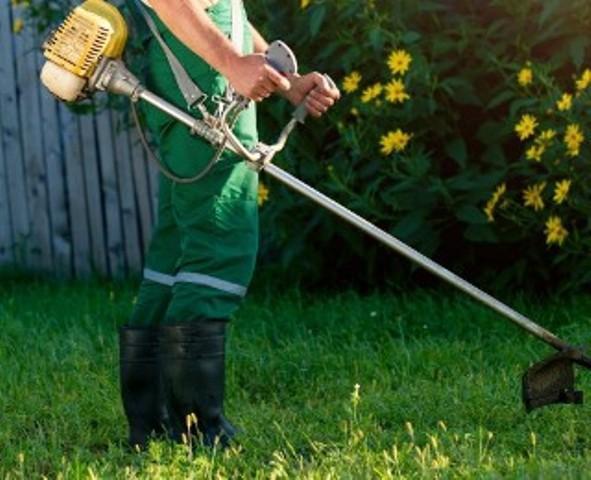 Serviço de jardinagem (limpeza, manutenção) e aluguel de
