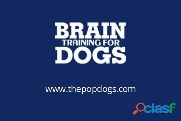 Online Dog Training Course   Dog Training Services   The Pop Dog