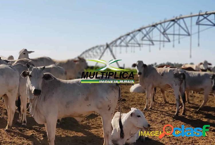 Fazenda para colocar pivô - prata mg soja, milho, gado, pecuária