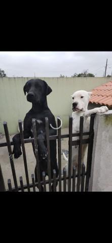 Cachorro porte grande