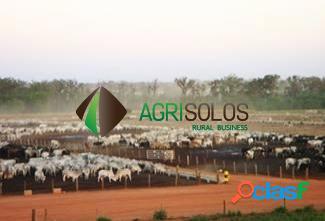 Fazenda 11.800 Há Goiás -Brasil: 2
