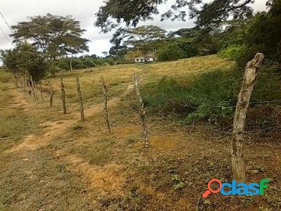 Venta De Terreno En Tucacas 10.000Mts2 Para Inversionistas 1