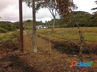 Venta De Terreno En Tucacas 10.000Mts2 Para Inversionistas 2