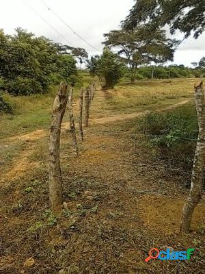 Venta De Terreno En Tucacas 10.000Mts2 Para Inversionistas 3