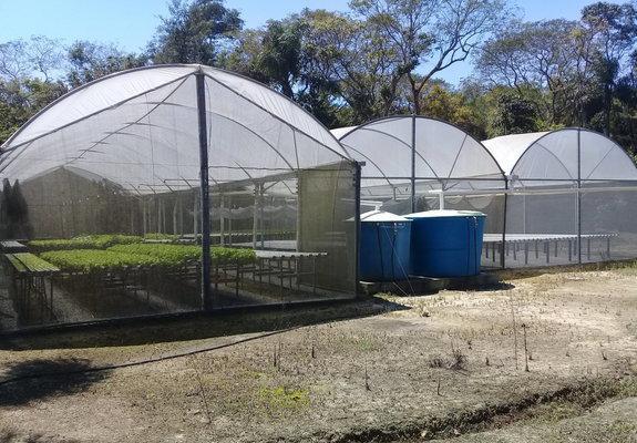 Sitio hidroponia - produção de hortaliças.