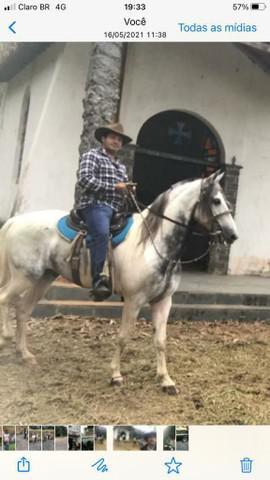 Cavalo manga larga mineiro inteiro