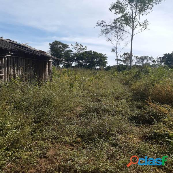 160 Alqs Cultura Boa Logística Muita Água Araguaína TO 16