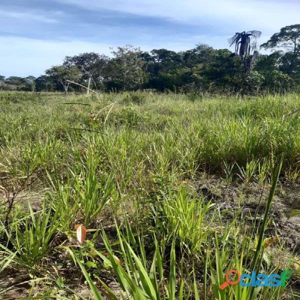 160 Alqs Cultura Boa Logística Muita Água Araguaína TO 15