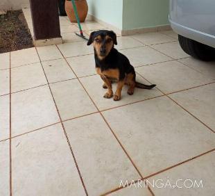 Estou doando um cachorro, cofape com vira lata, castrado!!