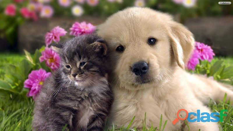 Excelente pet shop e clínica veterinária em diadema.