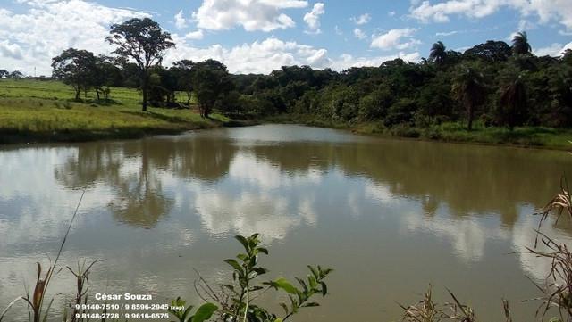 Lotes ao lado de mata nativa e parque ecológico e lago