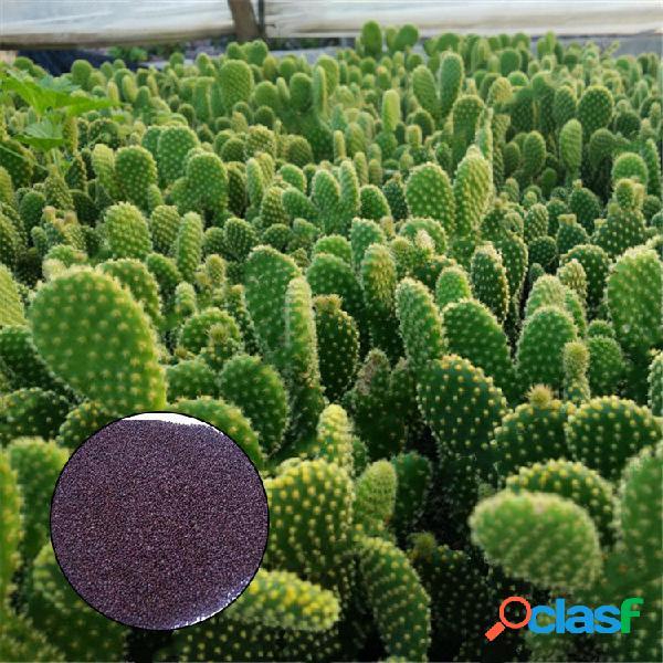 Egrow 100 pcs / bolsa opuntia sementes bonsai plantas suculentas cacto de proteção contra radiação verde