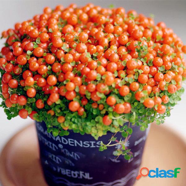 Egrow 100 pcs / bolsa grânulos da lâmpada grama sementes flor sementes jardim bonsai planta para casa jardim plantas