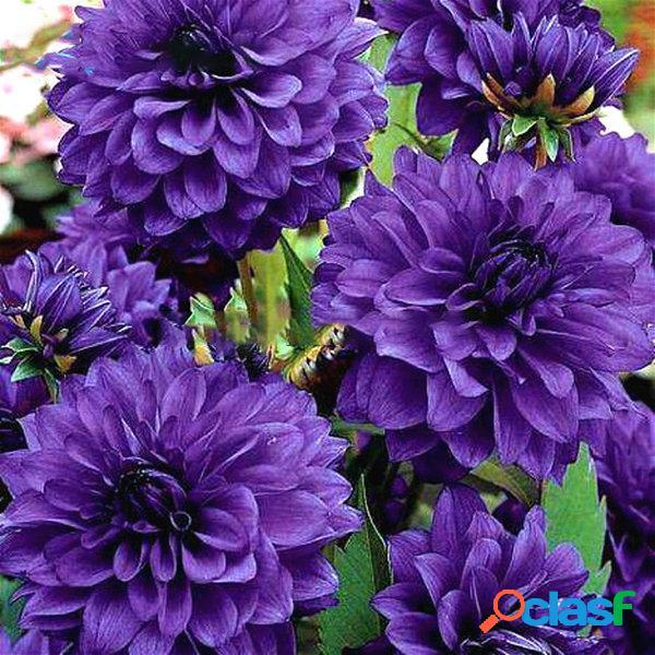 Egrow 100 pcs / bolsa raro arco-íris chinês peônia flores sementes bonsai jardim para plantas de jardim para casa