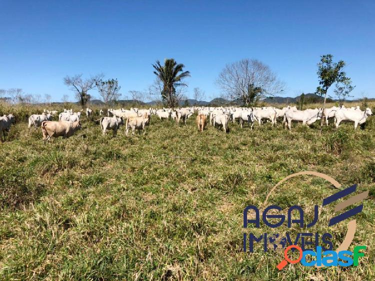 Fazenda em cumaru do norte-pa | 1.800 alqueires | dupla aptidão