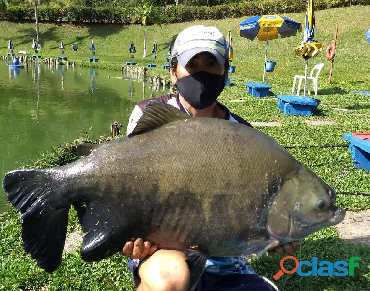 Pesca esportiva   três lagos, ambiente familiar e grandes exemplares 2