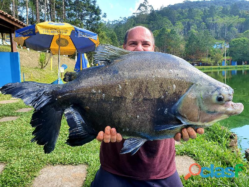 Pesca esportiva   três lagos, ambiente familiar e grandes exemplares 3