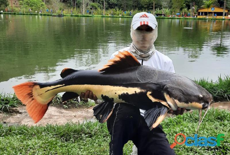 Pesca esportiva   três lagos, ambiente familiar e grandes exemplares 4