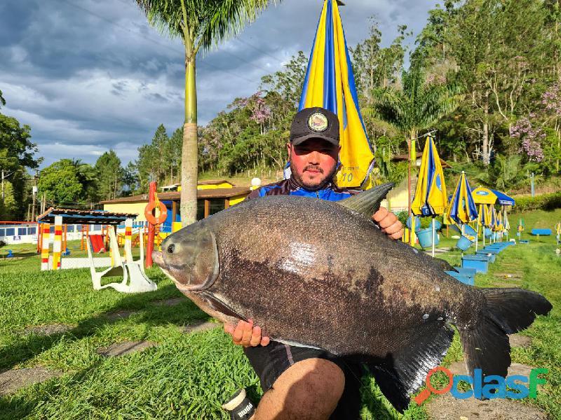 Pesca esportiva   três lagos, ambiente familiar e grandes exemplares 5