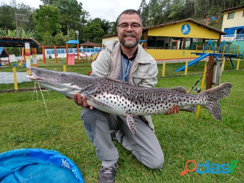 Pesca esportiva   três lagos, ambiente familiar e grandes exemplares 6