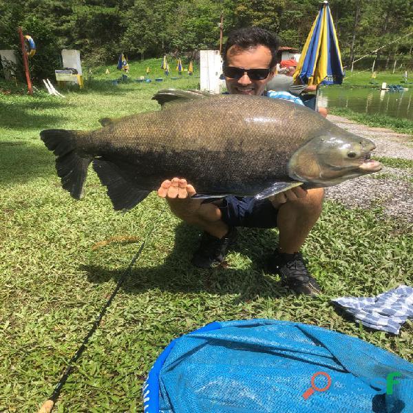 Pesca esportiva   três lagos, ambiente familiar e grandes exemplares 7
