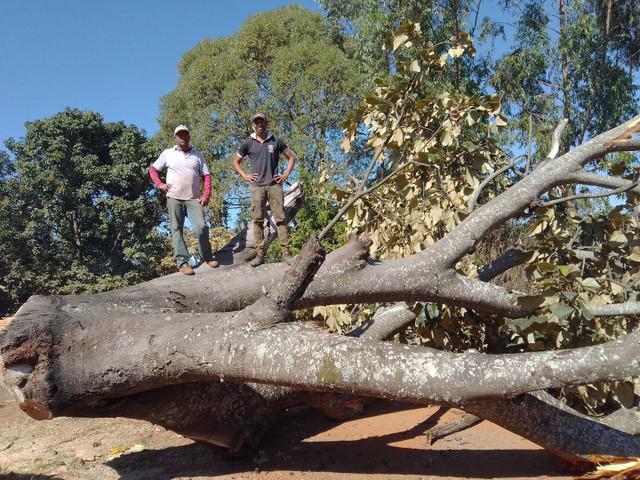 Corte e poda de árvores cerca viva e roçagem