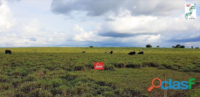 Fazenda dupla aptidão área 8.000 hectares em colinas   to.