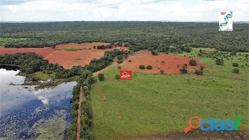 Fazenda dupla aptidão município de formoso do araguaia tocantins área 1.100 há.