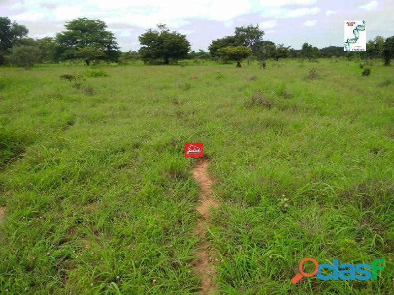 Fazenda dupla aptidão Município de Formoso do Araguaia Tocantins área 1.100 há. 2
