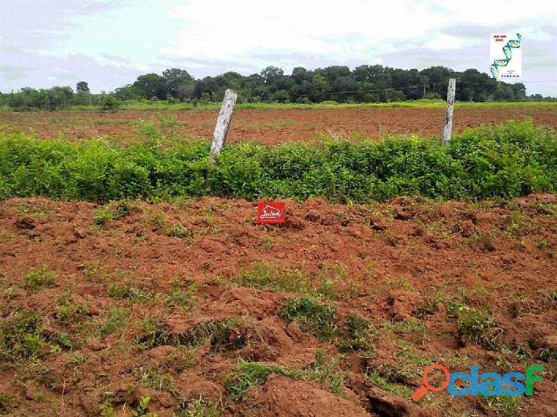 Fazenda dupla aptidão Município de Formoso do Araguaia Tocantins área 1.100 há. 4