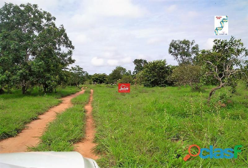 Fazenda dupla aptidão Município de Formoso do Araguaia Tocantins área 1.100 há. 5
