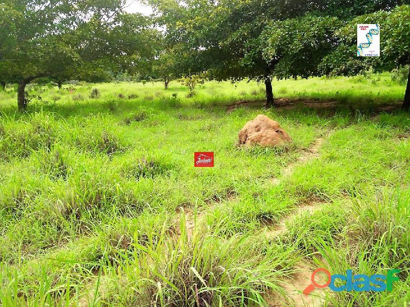Fazenda dupla aptidão Município de Formoso do Araguaia Tocantins área 1.100 há. 6