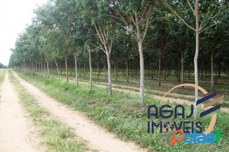 Fazenda em muricilândia-to | 3.512 alqueires | dupla aptidão - seringueira