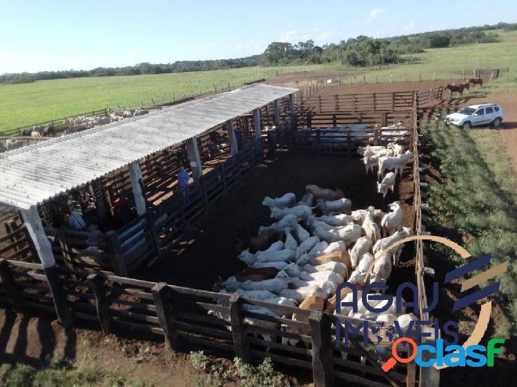 Fazenda em peixe-to | 661 alqueires | lavoura - pecuária