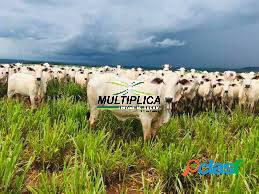 Fazenda Santa Vitória, Dupla Aptidão, 580 ha, R$ 34.435 por ha 1