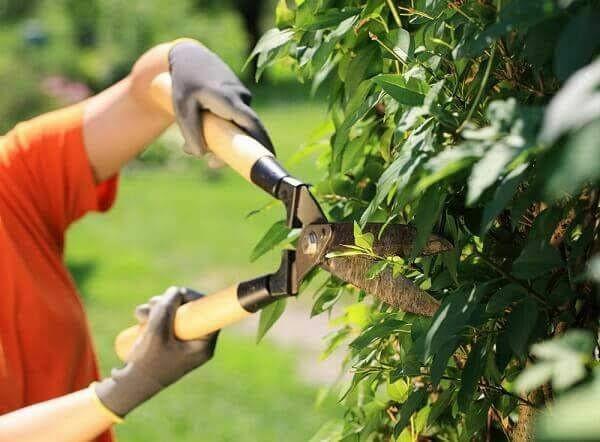 Jardinagem em geral