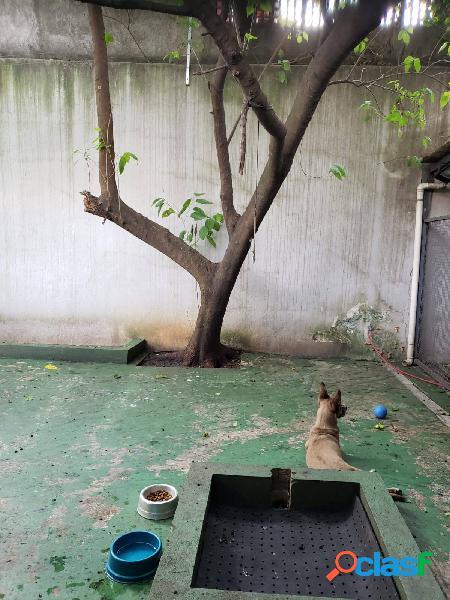 Clinica Veterinária e Pet Shop>Brooklin 3