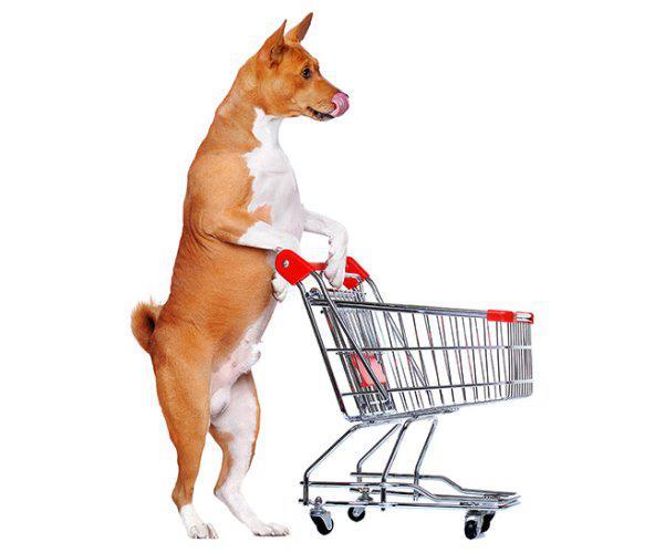 Montamos pet shop casas de ração clinica veterinárias